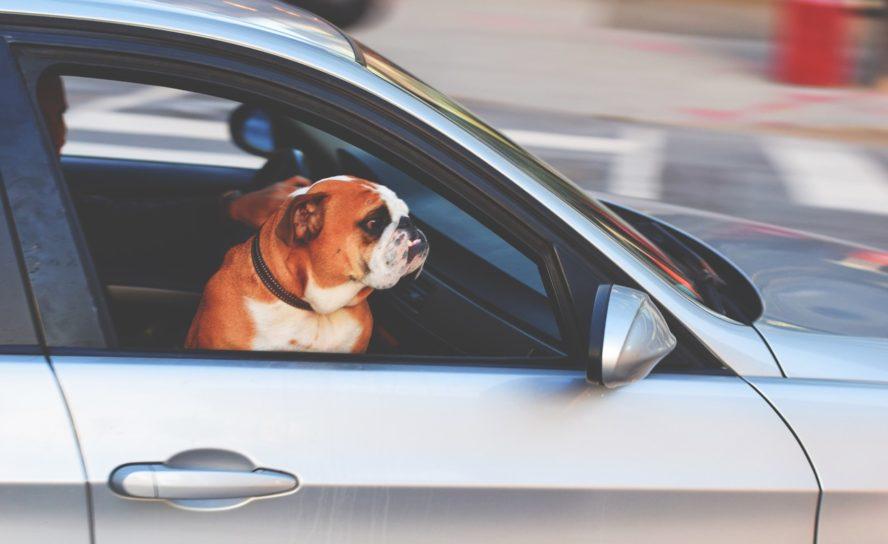 Reise med barn og hund